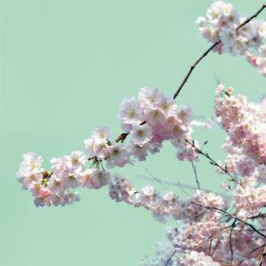 Fiori Primavera: Sfondo Verde