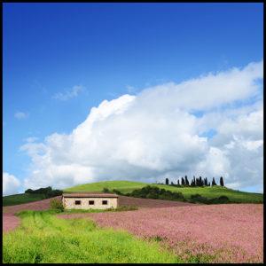 50×50 cm Collina Toscana.