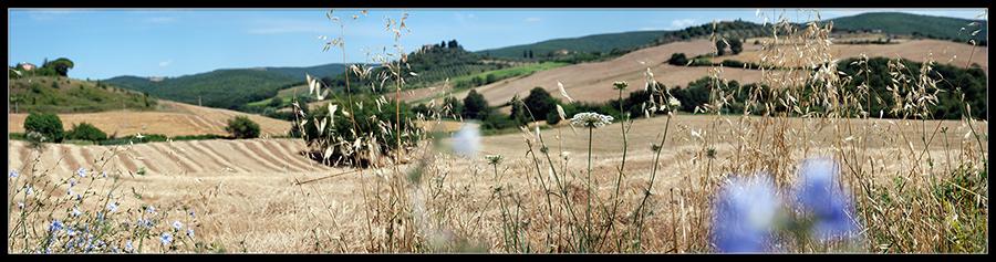 60×15 cm Toscana, colline in Maremma