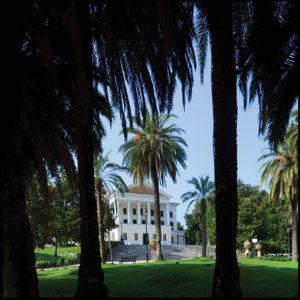 25×25 cm Le palme di Villa Torlonia.