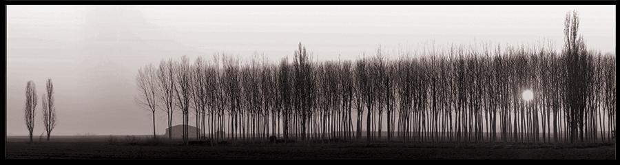 60×15 cm Pioppeto in bianco e nero.